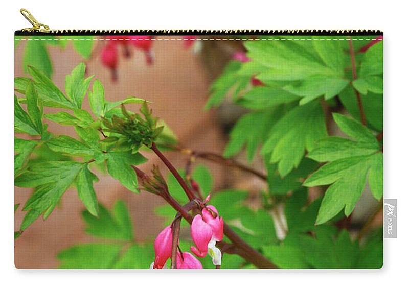 Flower Carry-all Pouch featuring the photograph String Of Bleeding Hearts by Marilyn Hunt