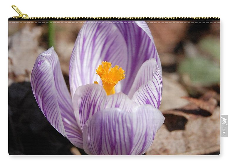 Digital Photography Carry-all Pouch featuring the photograph Striped Crocus by David Lane
