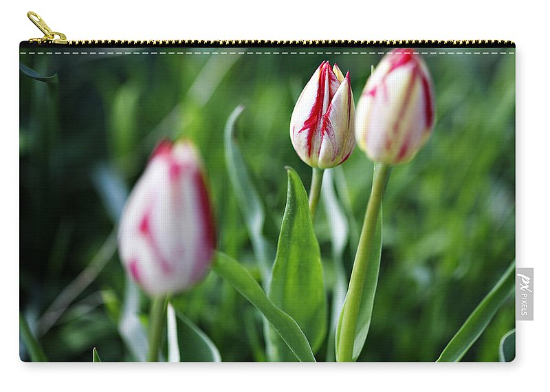 Flower Carry-all Pouch featuring the photograph Striped Tulips In Spring by Marilyn Hunt