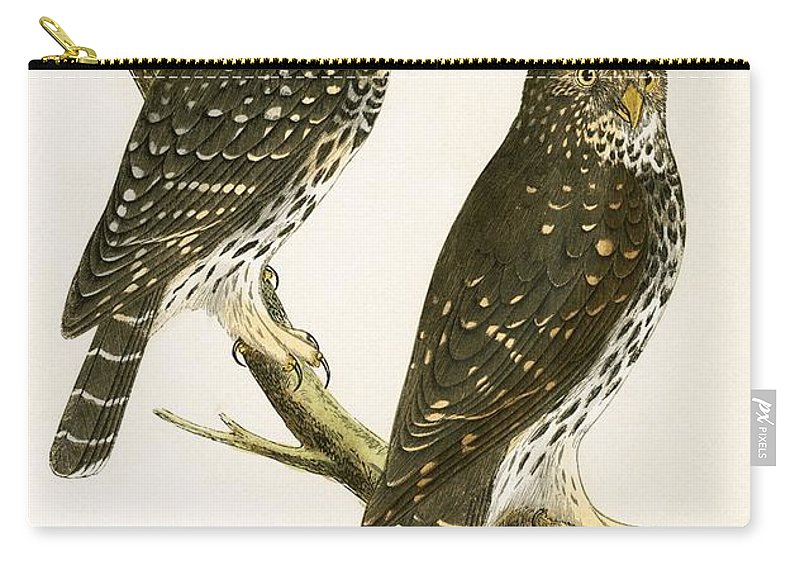 Bird Carry-all Pouch featuring the painting Strix Pusilla by English School