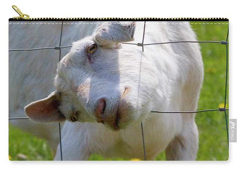Goat Carry-all Pouch featuring the photograph Stuck by Mike Dawson