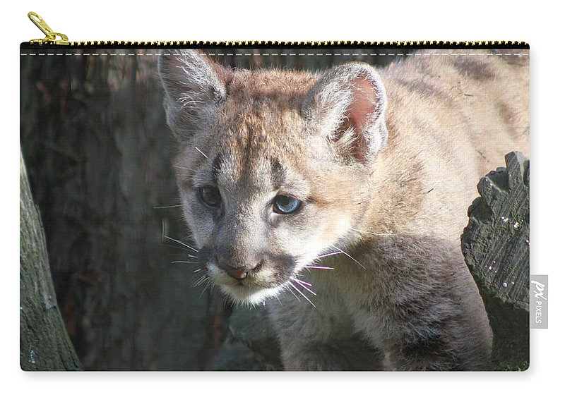 Cougar Carry-all Pouch featuring the photograph Studying The Ways by Laddie Halupa