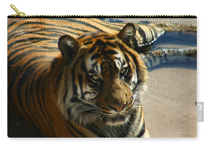 Tiger Carry-all Pouch featuring the photograph Sumatran Tiger by Anthony Jones