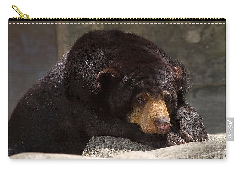 Animal Carry-all Pouch featuring the photograph Sun Bear by Louise Heusinkveld