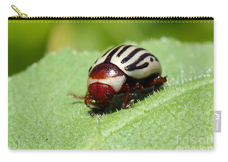 Bug Carry-all Pouch featuring the photograph Sunflower Beetle by Teresa Zieba