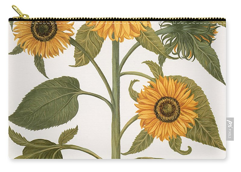 1613 Carry-all Pouch featuring the photograph Sunflower by Granger