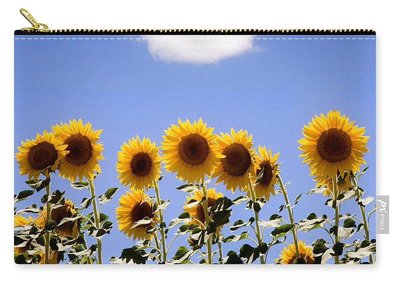 Sunflowers Carry-all Pouch featuring the photograph Sunflowers With A Cloud by Mal Bray