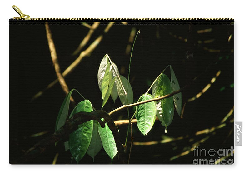Leaves Carry-all Pouch featuring the photograph Sunlit Leaves by Kathy McClure