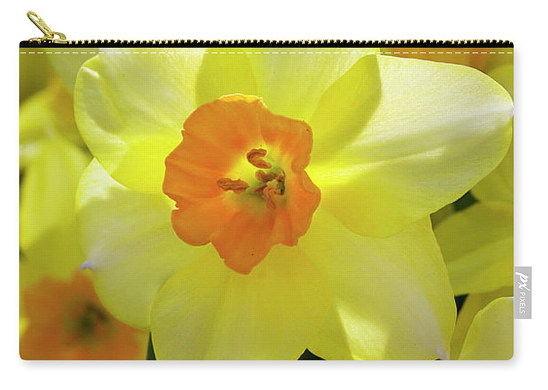 Narcissus Carry-all Pouch featuring the photograph Sunny Narcissus by Phyllis Denton