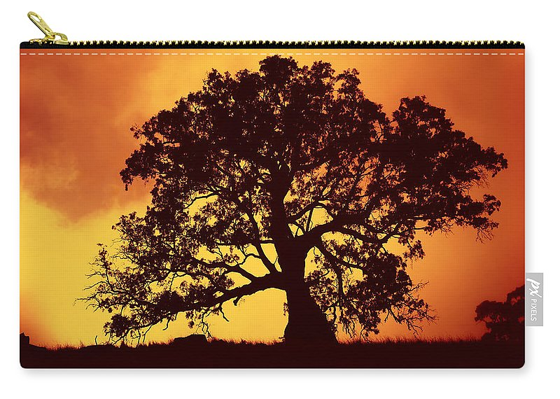 Gum Tree Carry-all Pouch featuring the photograph Sunrise Gum by Mike Dawson
