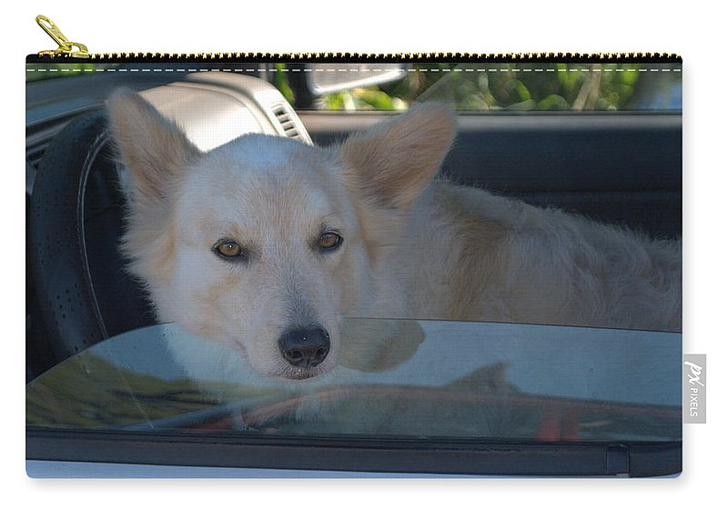Dogs Carry-all Pouch featuring the photograph Surfer Dog by Thomas Sexton
