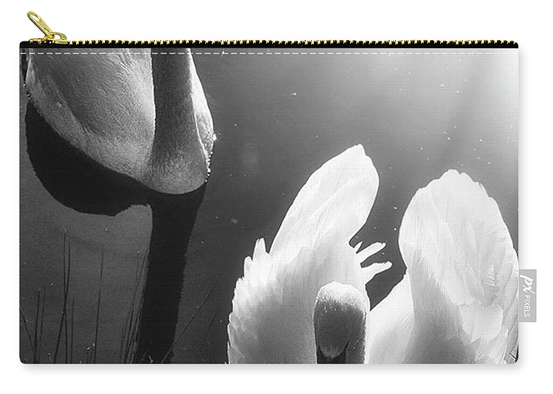 Swan Carry-all Pouch featuring the photograph Swan Lake In Winter - Kingsbury Nature by John Edwards
