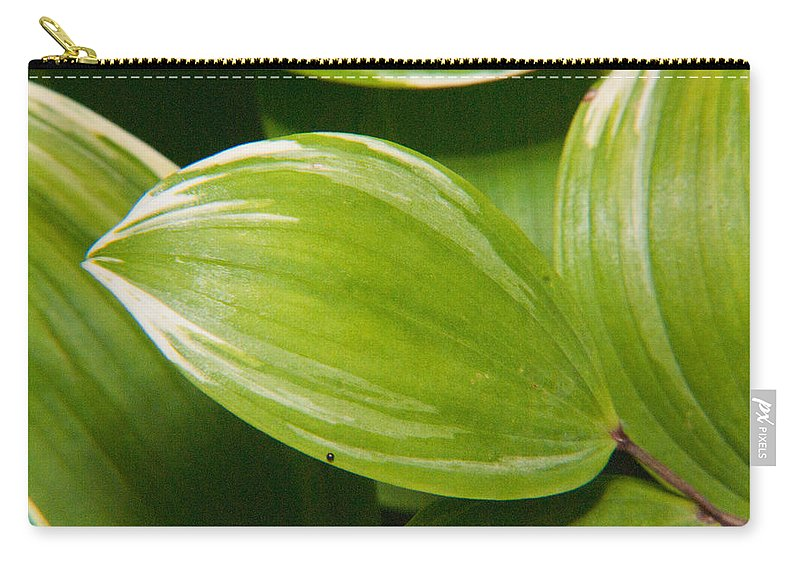 Plant Carry-all Pouch featuring the photograph Sweeping Green by Douglas Barnett
