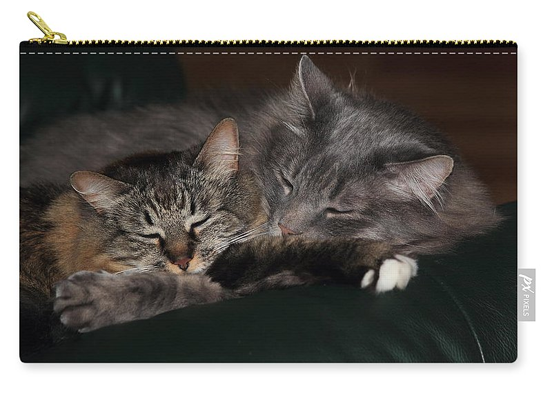 Cats Carry-all Pouch featuring the photograph Sweet Dreams by Shane Bechler