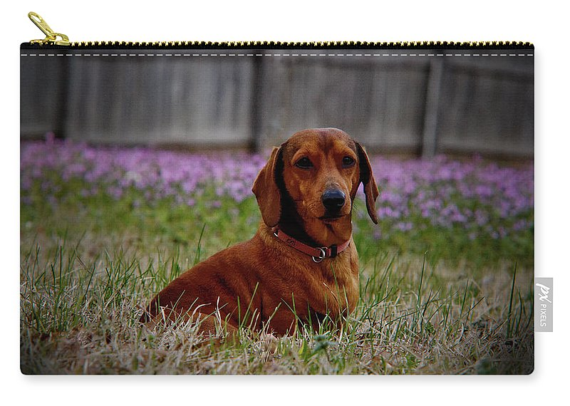 Wiener Dog Carry-all Pouch featuring the photograph Sweet Neal by Kim Henderson