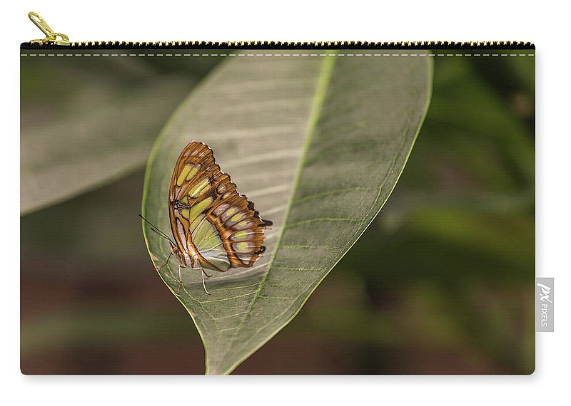 Parthenos Sylvia Carry-all Pouch featuring the photograph Sylvia by Calazone's Flics