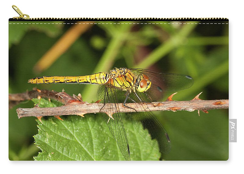 Odonata Carry-all Pouch featuring the photograph Sympetrum Sanguineum by Bob Kemp