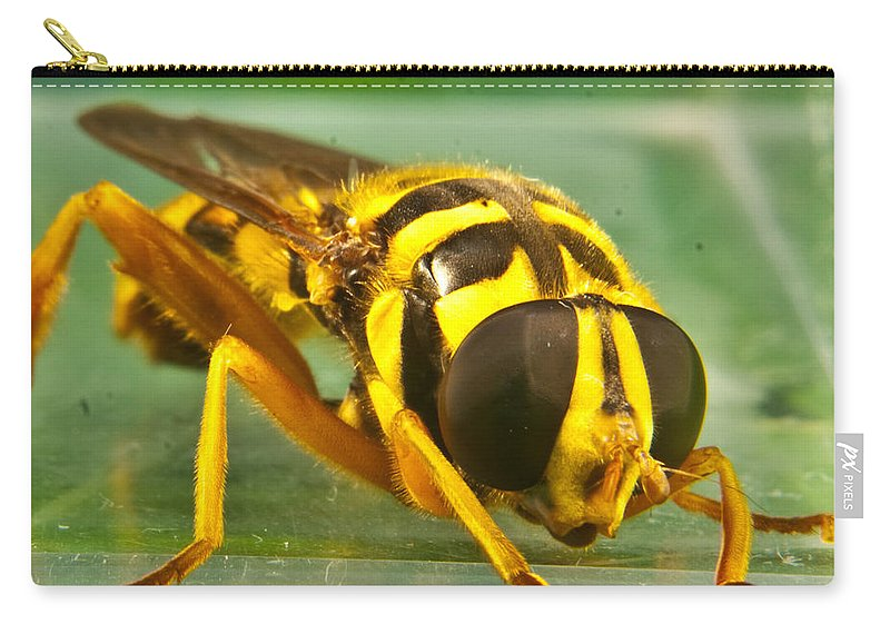 Syrphid Carry-all Pouch featuring the photograph Syrphid Eye To Eye by Douglas Barnett