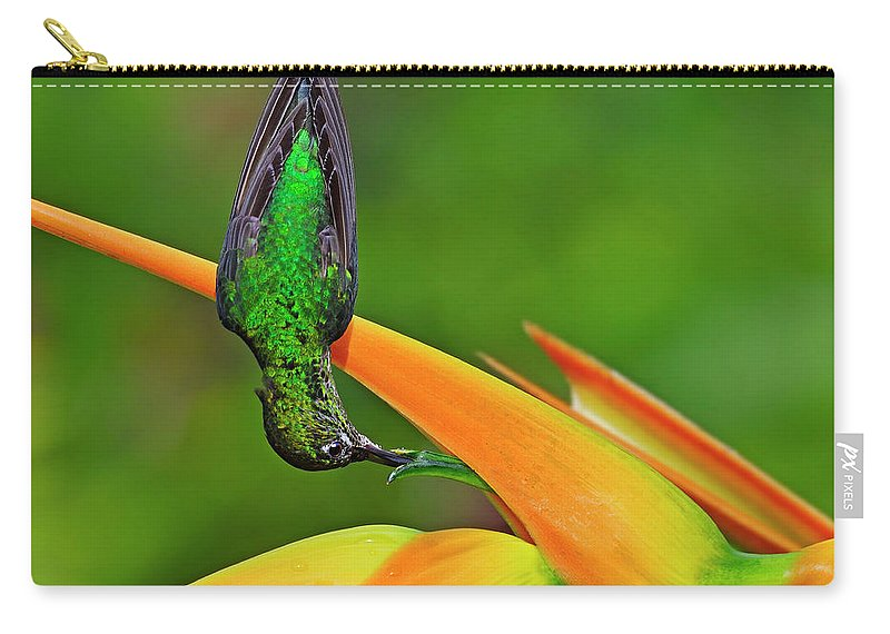 Green-crowned Brilliant Carry-all Pouch featuring the photograph Table Manners by Tony Beck
