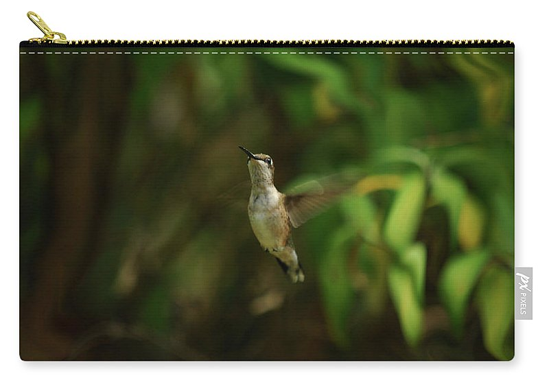 Hummingbird Carry-all Pouch featuring the photograph Take My Photo Please by Lori Tambakis