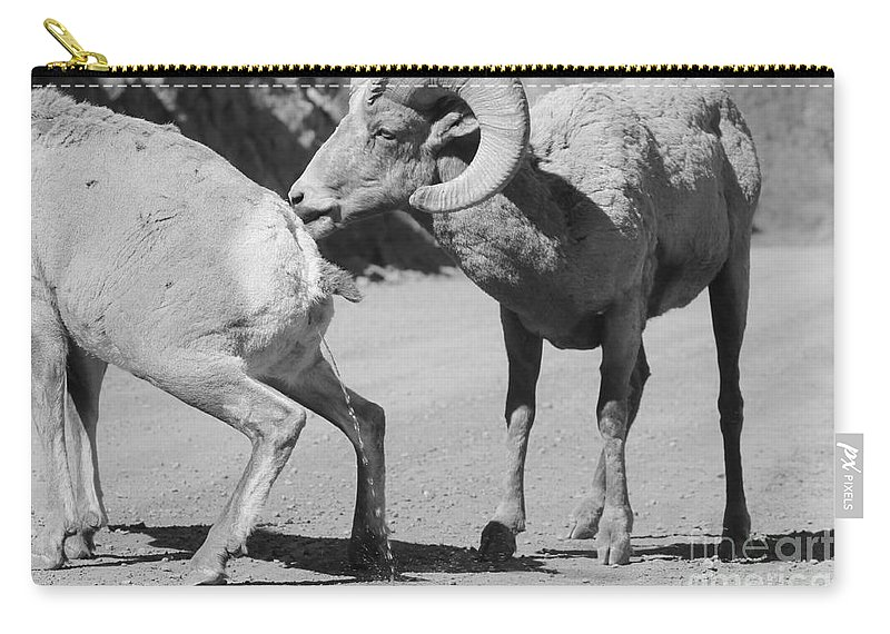 Nature Carry-all Pouch featuring the photograph Take That by Tonya Hance