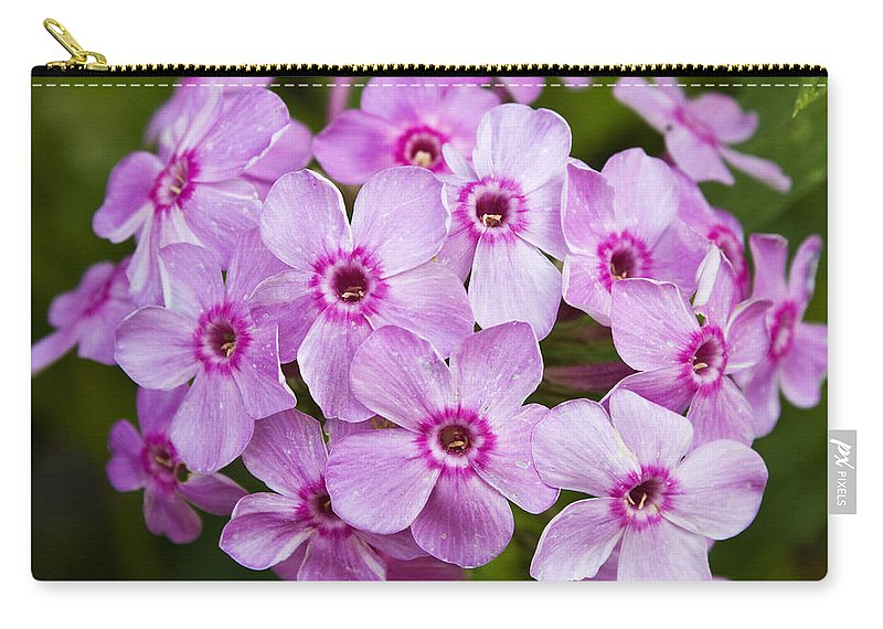 Phlox Carry-all Pouch featuring the photograph Tall Garden Phlox by Teresa Mucha