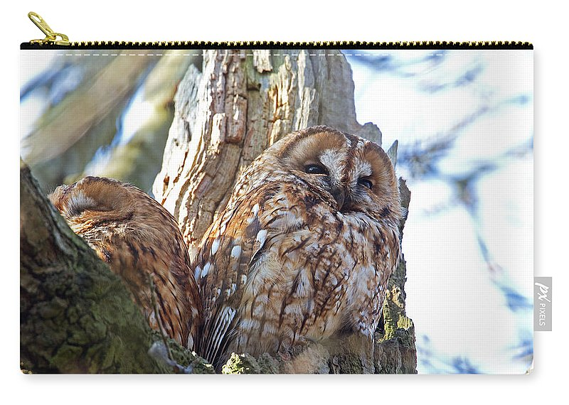 Tawny Owl Carry-all Pouch featuring the photograph Tawny Owls by Bob Kemp
