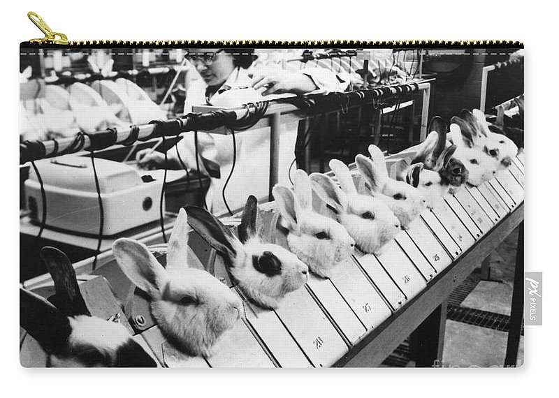 1957 Carry-all Pouch featuring the photograph Tests On Animals, 1957 by Granger