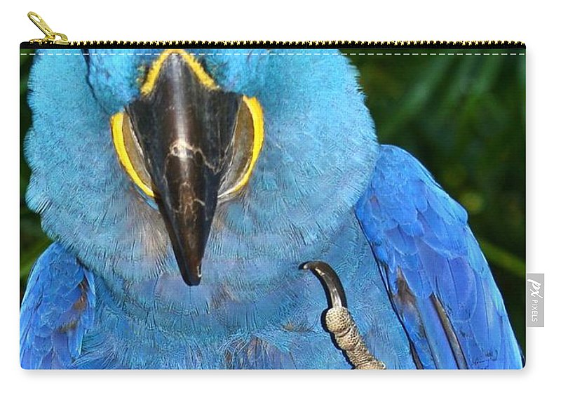 For The Birds Carry-all Pouch featuring the photograph The Bird by Lisa Renee Ludlum