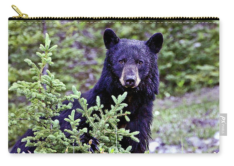 Black Bear Carry-all Pouch featuring the photograph The Black Bear Stare by Scott Mahon