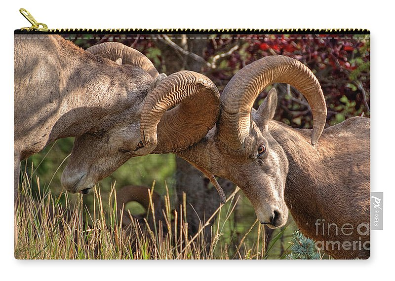 Bighorn Ram Carry-all Pouch featuring the photograph The Bump by James Anderson