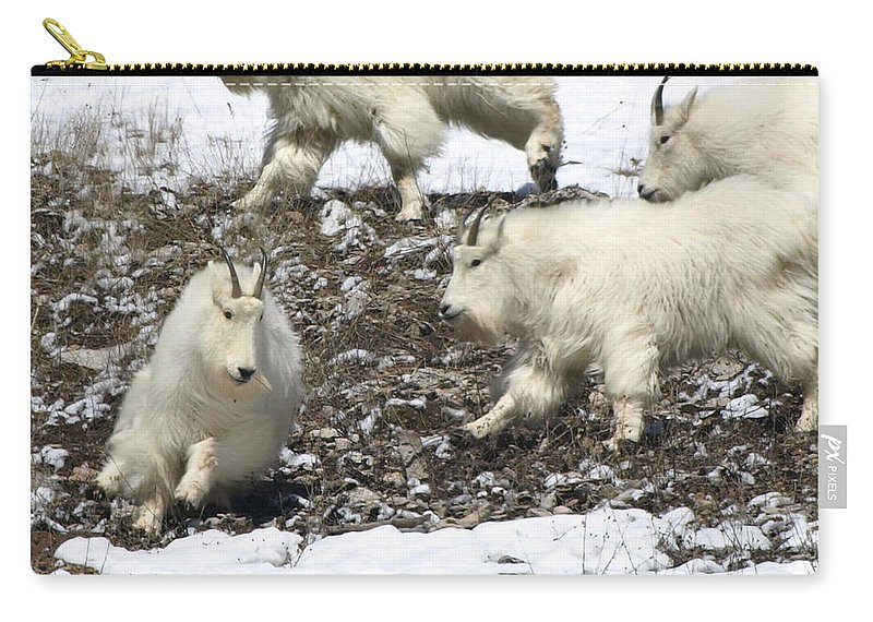 Animals Carry-all Pouch featuring the photograph The Chase by DeeLon Merritt