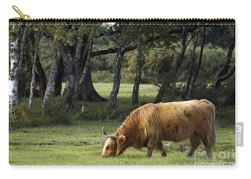 Heilan Coo Carry-all Pouch featuring the photograph The Creature Of New Forest by Angel Tarantella