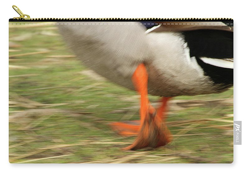 Duck Carry-all Pouch featuring the photograph The Duck Strut by Karol Livote