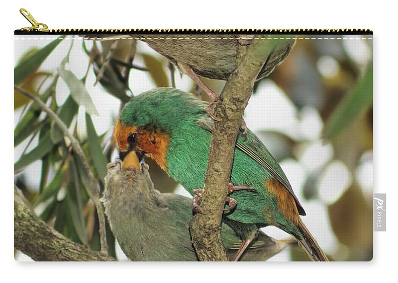 Finch Photography Carry-all Pouch featuring the photograph The Finch Family by Olga and Robert W Hamilton Jr
