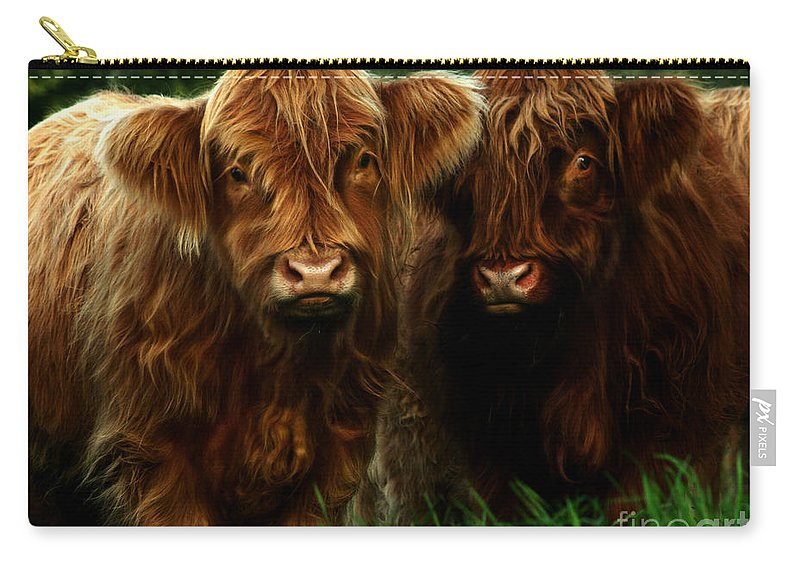 Heilan Coo Carry-all Pouch featuring the photograph The Fluffy Cows by Angel Ciesniarska