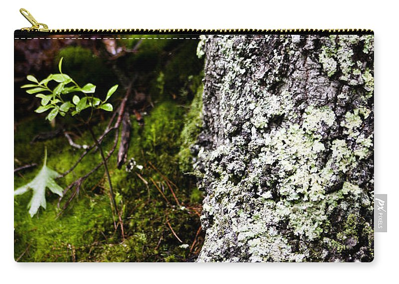 Moss Carry-all Pouch featuring the photograph The Forest Floor Bluestone State Park West Virginia by Teresa Mucha