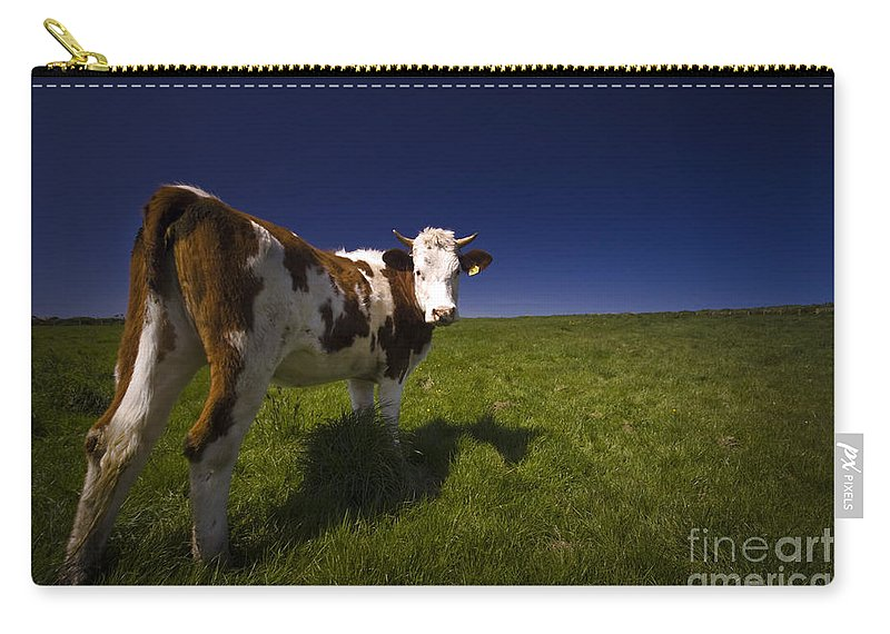 Cow Carry-all Pouch featuring the photograph The Funny Cow by Angel Tarantella