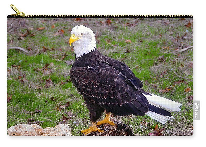 Bald Eagle Carry-all Pouch featuring the photograph The Great Bald Eagle by David Lee Thompson