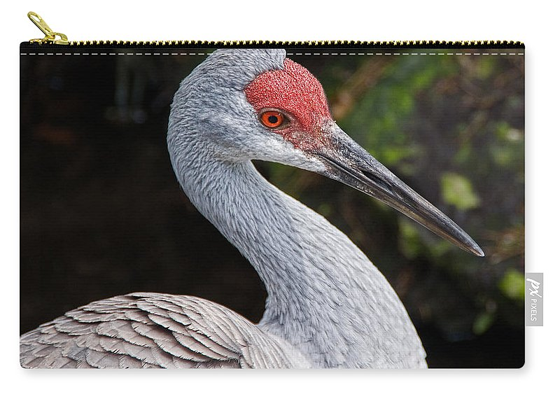 Bird Carry-all Pouch featuring the photograph The Greater Sandhill Crane by Christopher Holmes