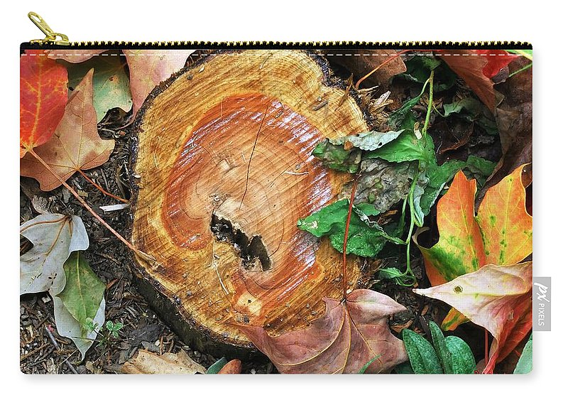 Autumn Carry-all Pouch featuring the photograph The Last Of The Old Yew by RC DeWinter
