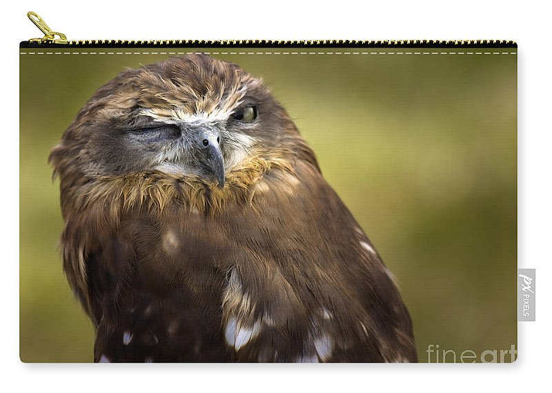 Owl Carry-all Pouch featuring the photograph The Little Owl by Angel Ciesniarska