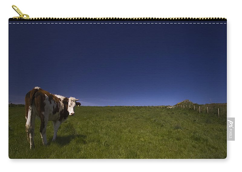 Cow Carry-all Pouch featuring the photograph The Moody Cow by Angel Ciesniarska