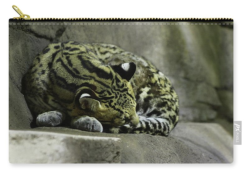Cat Carry-all Pouch featuring the photograph The Napping Rock by Laddie Halupa