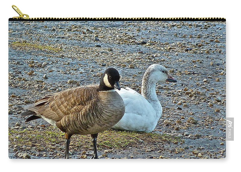 Geese Carry-all Pouch featuring the photograph The Odd Couple by Diana Hatcher