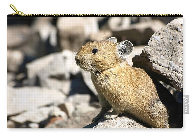 Animals Carry-all Pouch featuring the photograph The Pika by DeeLon Merritt