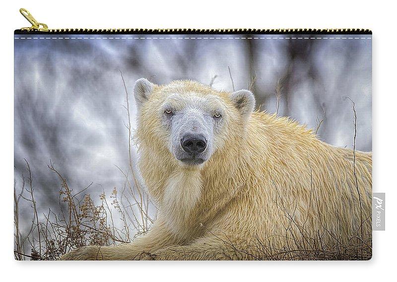 Polar Bear Carry-all Pouch featuring the photograph The Polar Bear Stare by LeeAnn McLaneGoetz McLaneGoetzStudioLLCcom