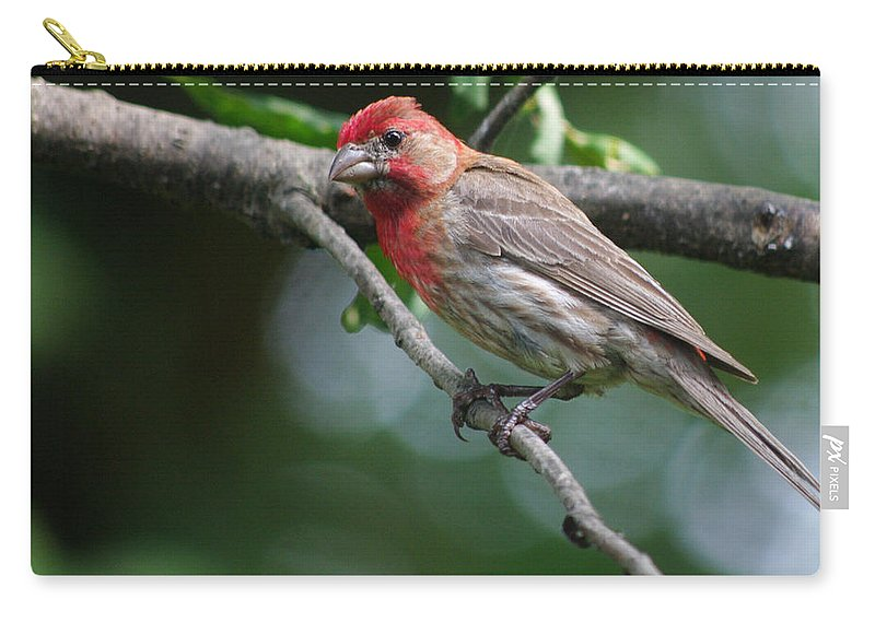 Carry-all Pouch featuring the photograph The Pose by Jenny Gandert