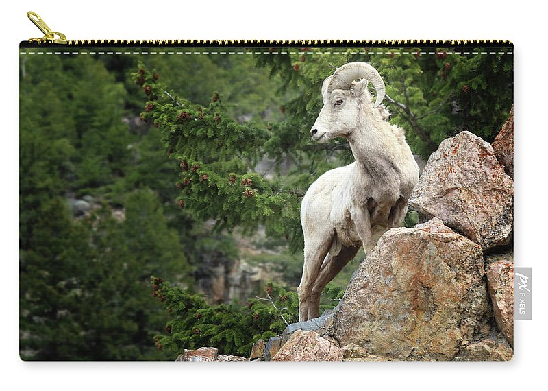 The Carry-all Pouch featuring the photograph The Poser by Brian Gustafson