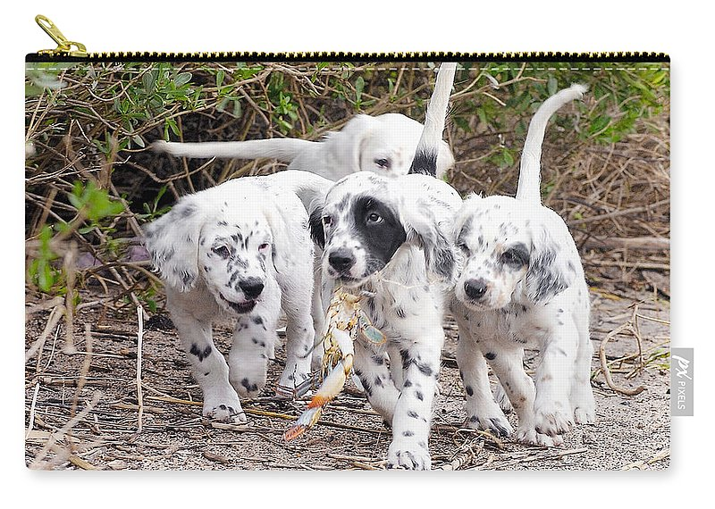 English Setter Carry-all Pouch featuring the photograph The Puppy's Prize by Scott Hansen